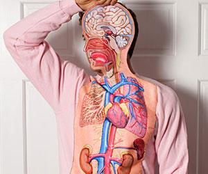 Body Anatomy Sweatshirt