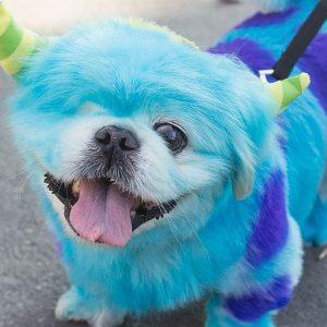Pet Hair Paint