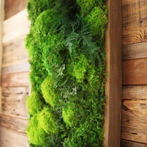 Artisan Moss Plant Art