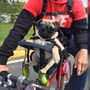 Dog Bicycle Seat