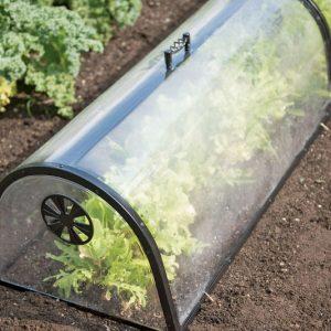 Miniature Greenhouse Garden