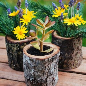 Natural Wood Log Planters