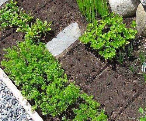 Seeding Squares