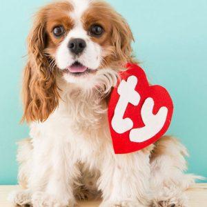 Beanie Baby Tag Dog Costume