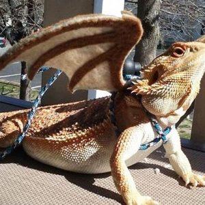Bearded Dragon Wings Leash