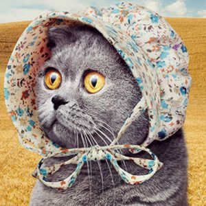 Bonnets For Cats