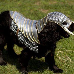 Dog Knight Armor
