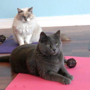 Feline Yoga Mats