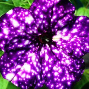 Galaxy Flowers