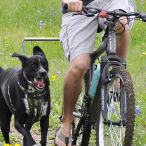 Hands Free Bicycle Leash