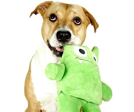 Indestructible Dog Toys - INTERWEBS