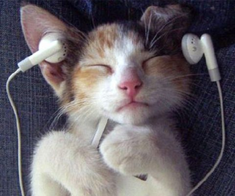 Music For Cats