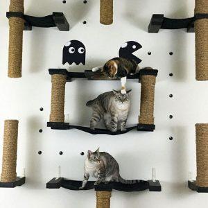 Pac-Man Cat Complex