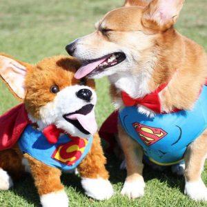 Personalized Stuffed Pets