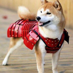 Pet Samurai Armor