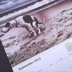 Pooping Dogs Calendar