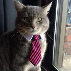 Professional Pet Neck Tie