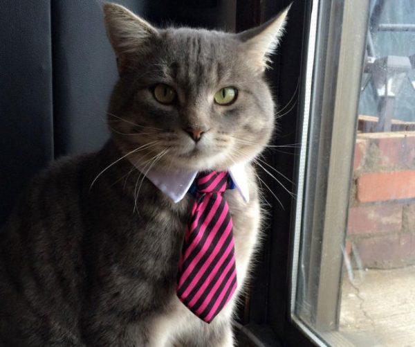 Professional Pet Neck Tie