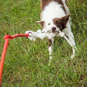 Self Tugging Dog Toy