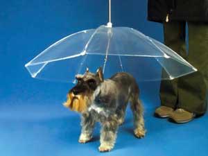 The Dog Umbrella