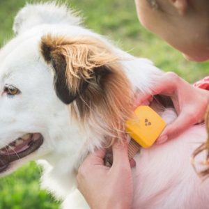 The No Monthly Fee GPS Pet Tracker