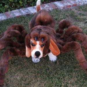Dog Tarantula Costume