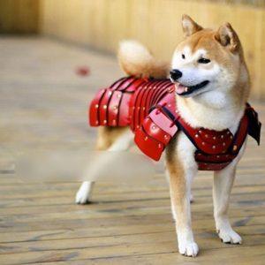 Samurai Pet Armor for Cats & Dogs