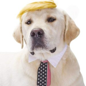 Donald Trump Dog Costume