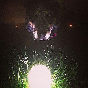 Glow In The Dark Pet Ball