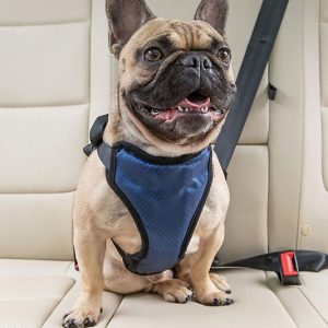 Doggy Vehicle Safety Harness