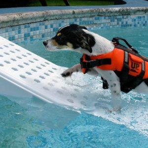 Pet Pool Escape Ramp